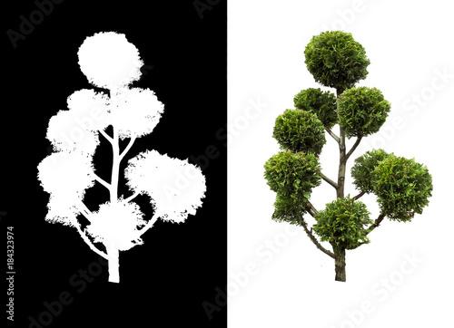 tree isolated trees