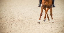 Dressage Horse And Rider. Sorr...