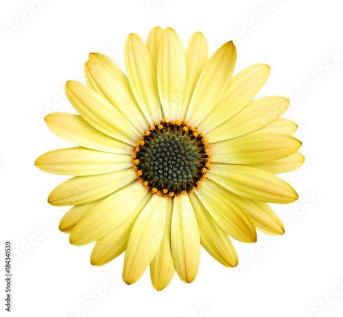 Fotografia  Close-up yellow daisy flower isolated on white background