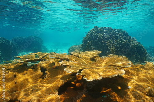 Caribbean sea underwater shallow coral reef, Bastimentos national marine park, Bocas del Toro, Panama, Central America
