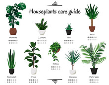 Popular And Common Houseplants...