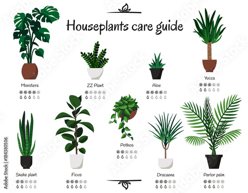 lighting for houseplants. Popular And Common Houseplants Care Guide. Vector Isolated Collection Of  Various Indoor Ornamental Plants With Lighting For