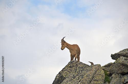 Тур в горах Западного Кавказа в облачный день Tapéta, Fotótapéta