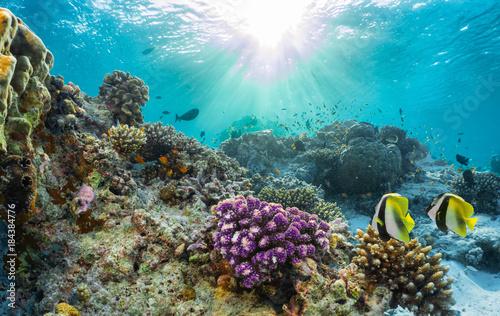 Staande foto Koraalriffen Buntes Korallenriff mit tropischen Fischen auf den Malediven
