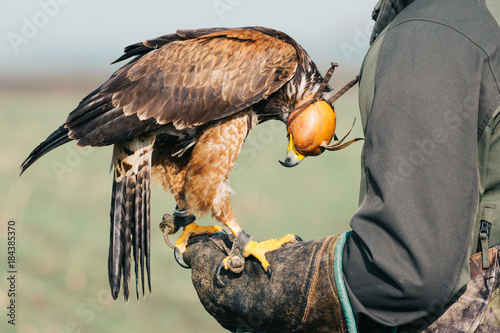 Photo Falconer with hawk on the hand