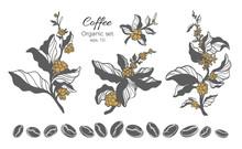 Vector Set Of Coffee Tree Branch