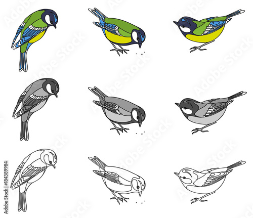 drawing of a bird of a titmouse Linear pattern, black and white and color options Fototapete