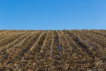 Natural Corn Field In Winter, ...
