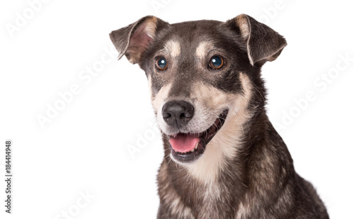 Portrait photo of an adorable mongrel dog isolated on white Wallpaper Mural