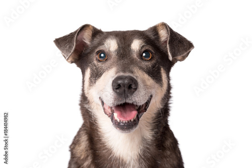fototapeta na drzwi i meble Portrait photo of an adorable mongrel dog isolated on white