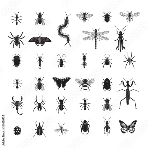 Fotografie, Obraz  Insects vector icon set. Realistic vector insects set.