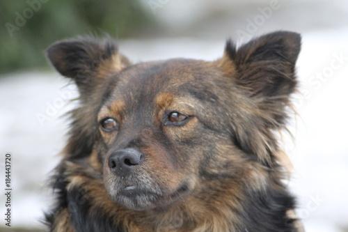Poster Chien Hunde Gesicht