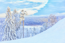 Snow-covered Trees On The Ski Slope Against The Backdrop Of The Forest And The Setting Sun.