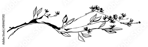 Fototapeta Hand drawn tree branch with leaves and flowers painted by ink. Grunge style vector illustration. Sketch black image on white background. obraz
