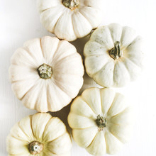 Bright Pumpkins Collection On ...