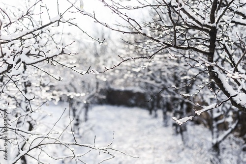 Photo Stands Dark grey snowy winter tree branches