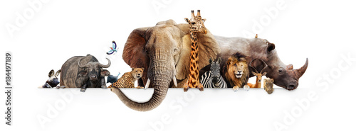 Photo  Safari Animals Hanging Over White Banner