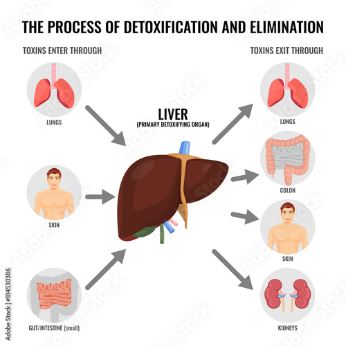 Fotomural  Process of detoxification and elimination cartoon medical poster