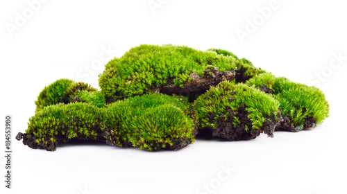 Fotografía Green moss isolated on white bakground