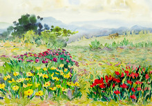 Watercolor Painting Landscape Colorful Of Wildflowers, Cottage In Meadow