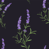 Vector lavender seamless pattern. Beautiful and elegant lavender flowers background  - 184564750