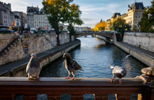 Birds In Paris. View From Pont...