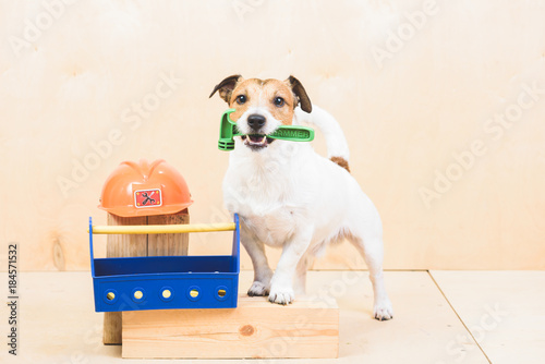 Do it yourself diy concept with funny dog as builders assistant do it yourself diy concept with funny dog as builders assistant solutioingenieria Image collections