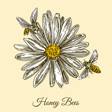 Honeybees Collect Nectyar. Two Bee Sitting On A Large Daisy. Engraving Style. Vector Illustration.