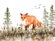 Walking Red Fox Sketch