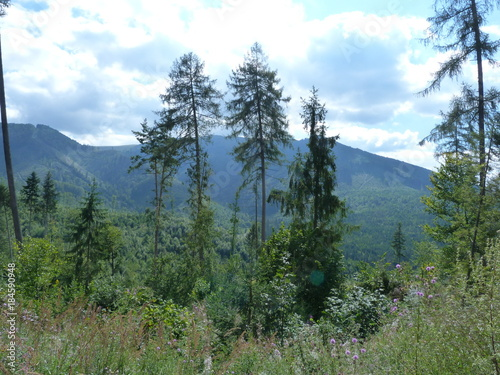 The nature of the mountain forest of the Ukrainian Carpathians. © Hennadii