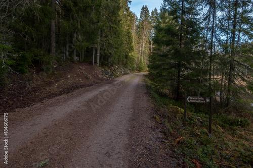 Tuinposter Weg in bos Norra Kvill National Park