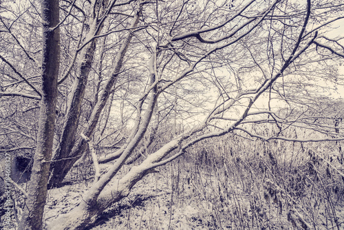 Photo sur Toile Les Textures Trees covered with snow in the forest