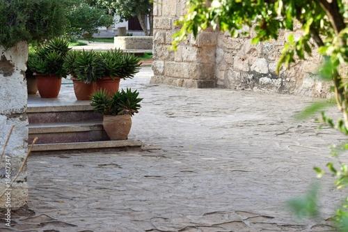 Cadres-photo bureau Jardin growing green cactus