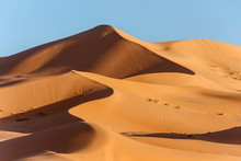 Golden Sand Dune In Sahara Des...