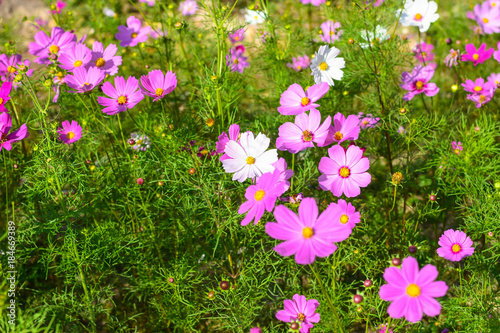 Fotografie, Obraz  Colorful flowers blossom in the breeze and sunlight in the winter