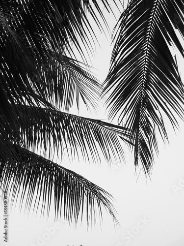 liscie-palmy-na-oknie-w-lazience