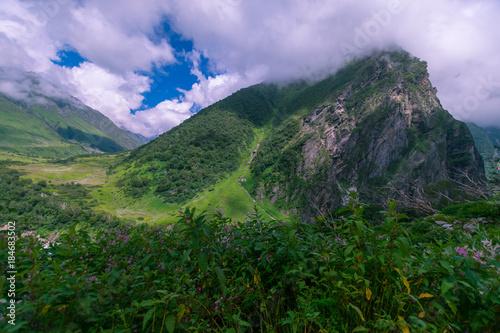 Tuinposter Purper valley of flowers national park, uttarakhand, india