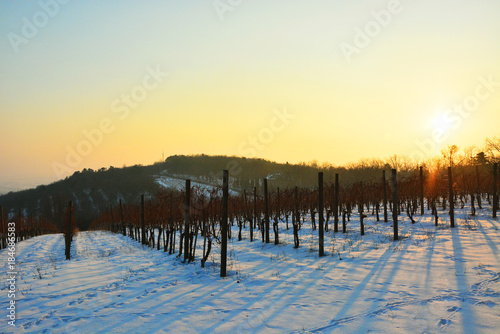 Fotobehang Zwavel geel Winter vineyard landscape