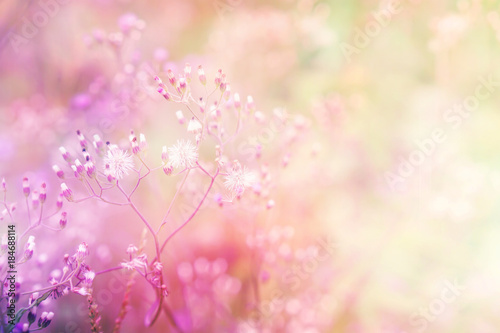 Fotobehang Natuur romance soft grass flowers field sweet pink and blue pastel nature background for valentine and wedding invitation card in vintage tone with copy space