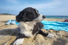 Dog At The Beach, Dog Lying On...