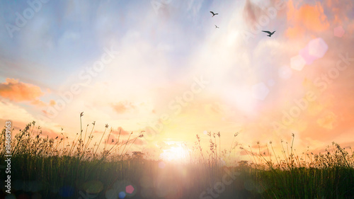 Tuinposter Zonsondergang World environment day concept: Beautiful meadow and sky autumn sunrise background