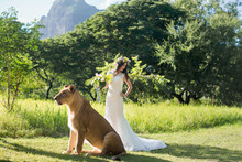 Beautiful Bride And A Lioness ...
