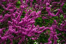 Beautiful Springtime Closeup B...