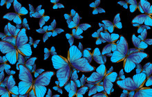 Wings Of A Butterfly Morpho. Flight Of Bright Blue Butterflies Abstract Background.