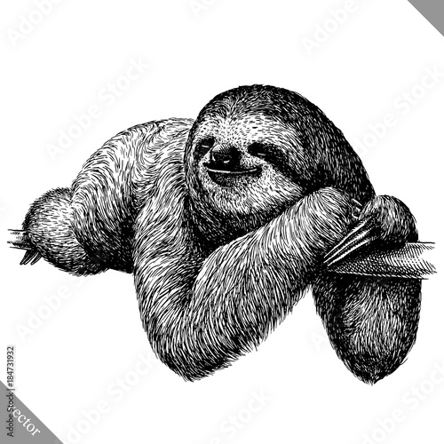 Photo black and white engrave isolated sloth vector illustration