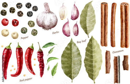 Fotomural Spice collection watercolor illustration, isolated on white