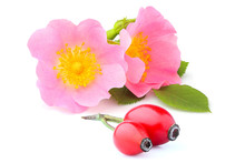 Rosehip Flowers With Berries I...