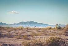 Cactus In Desert Landscape Wit...