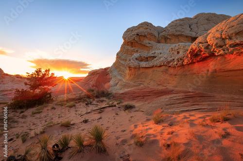 Fototapety, obrazy: Amazing desert southwest landscape.