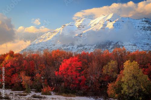 Foto op Canvas Bergen Fresh autumn snow in the Wasatch, Utah, USA.